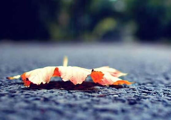 雨天赏花发朋友圈的简短一句话 微信清晨赏花的心情句子